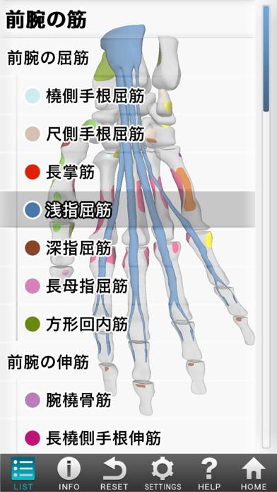 3D筋肉図鑑 ScreenShot2
