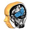 Rainer Goebel, Brain Innovation - Brain Tutor HD kunstwerk