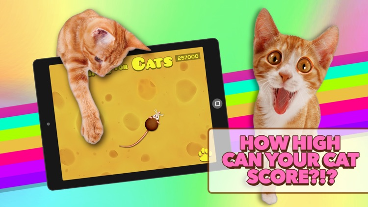 Game for Cats screenshot-3