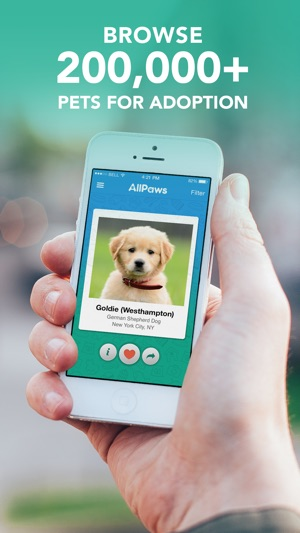 all paws app