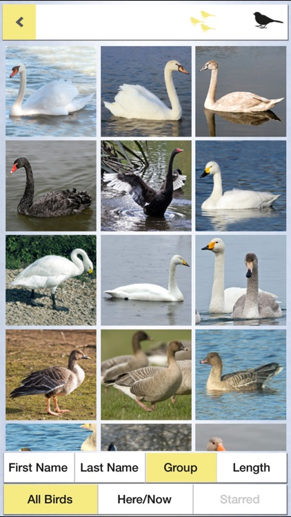 Birds of the Netherlands: A Field Guide from iSpiny screenshot-1