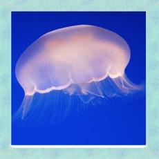 Activities of Jellyfish Simulator 3D