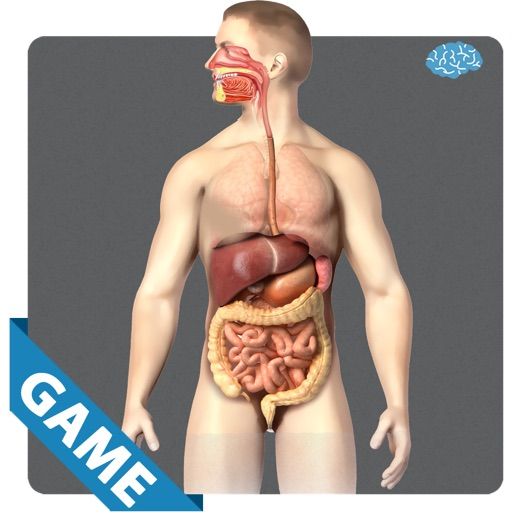 Digestive Anatomy Game
