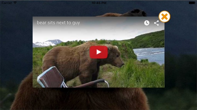 Zoo - Free Animal Videos, Sounds and Photos for Kids screenshot-3