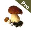 Rogers Mushrooms: Die Pilze Europas und Nordamerikas (Pro Version)