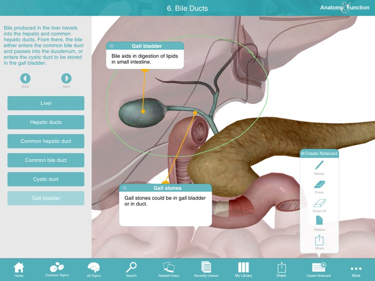Anatomy & Function: A 3D Visual Reference of the Human Body screenshot-3