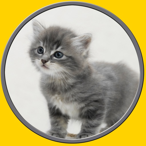 competition for cats - free game