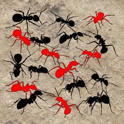 Sights and Sounds: Ants
