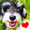 Hunde - Grüße, Sprüche & Zitate über den Hund