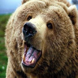 Grizzly Bear Sound Effects - High Quality Bear Calls for Hunting