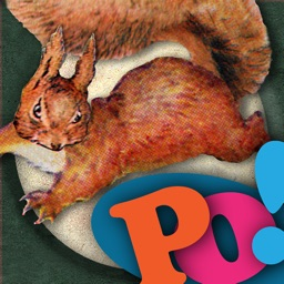 PopOut! The Tale of Squirrel Nutkin - Universal
