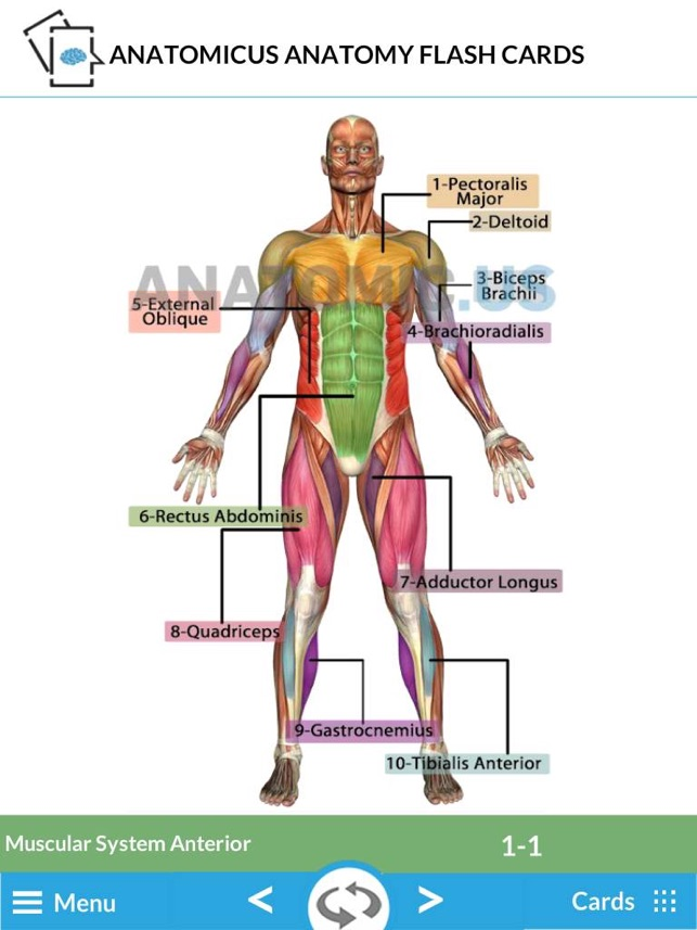 Anatomy Cards On The App Store