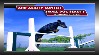 Small Dog Beauty and Agility Contest : The cutest animal
