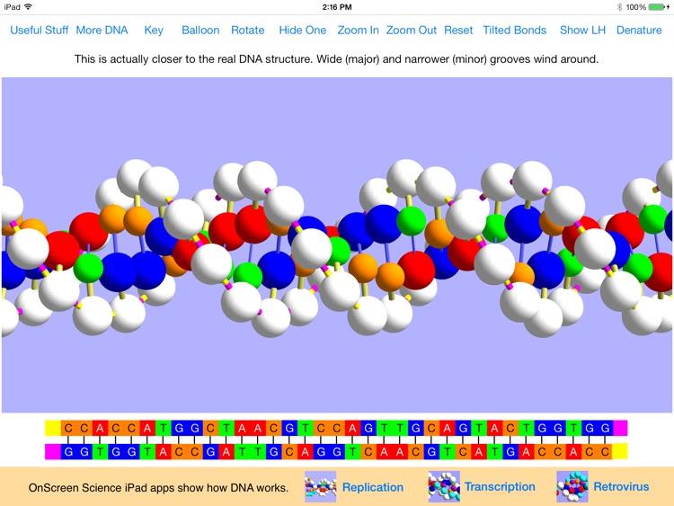 OnScreen DNA Model screenshot-0