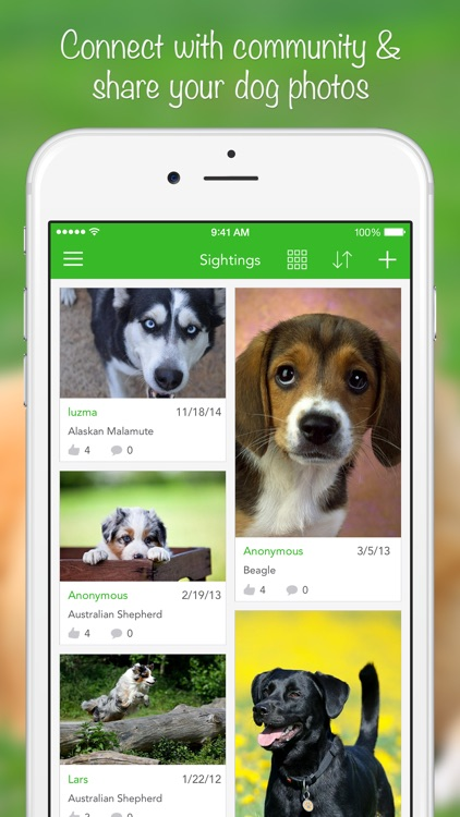 iKnow Dogs 2 LITE - NATURE MOBILE - Dog Breed Guide and Quiz Game screenshot-4