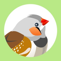 Finch for Twitter - Discover and curate photos