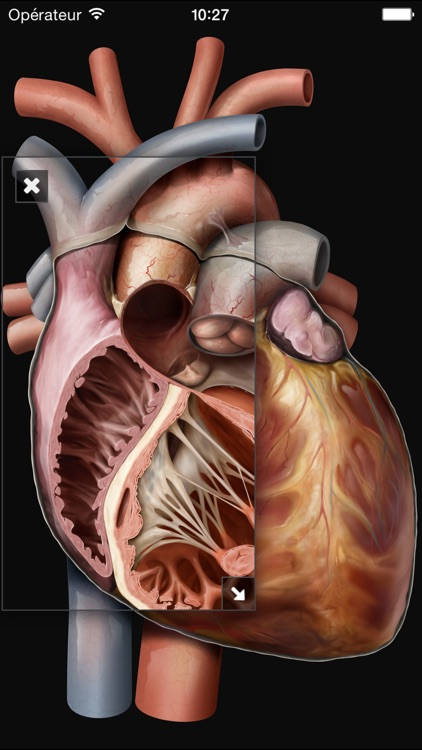 Virtual Human Body screenshot-4