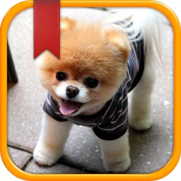 Dog Breed Quiz & Trivia App - All about Dogs 101 Guide for Animal Training and Types Name