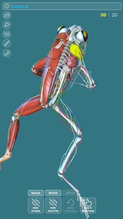 Visual Anatomy - Frog