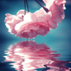 Water Reflection Effects Pro - Photo Mirror & Light Blender to Clone Yourself