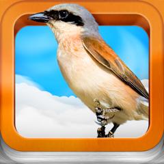Vogelatlas für Kinder