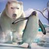 ペンギン ビレッジ レース ゲーム 無料 動物 対戦
