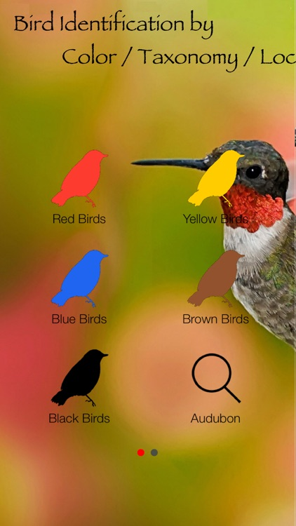 Bird Identification by Color - Ornithology Guide for Northeastern U.S. Bird Watching + Bird Sounds/Songs