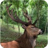 Deer Hunting Animals Jungle