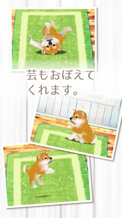 癒しの子犬育成ゲーム〜柴犬編〜