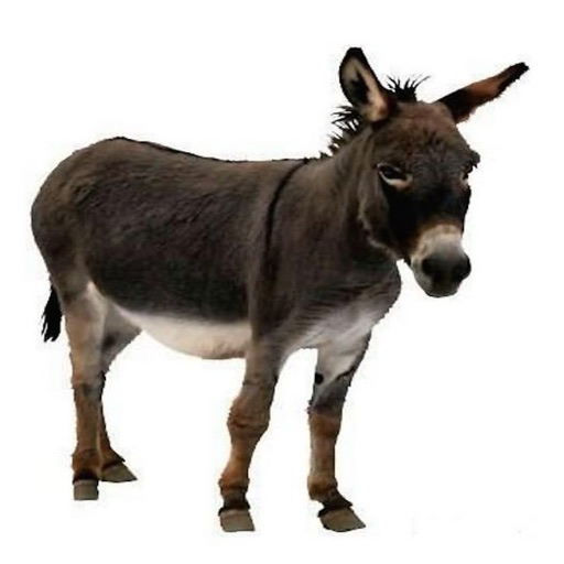 Donkey Sound Effects - Lovable Sounds, Ringtones and More from this Furry  Animal by APH International