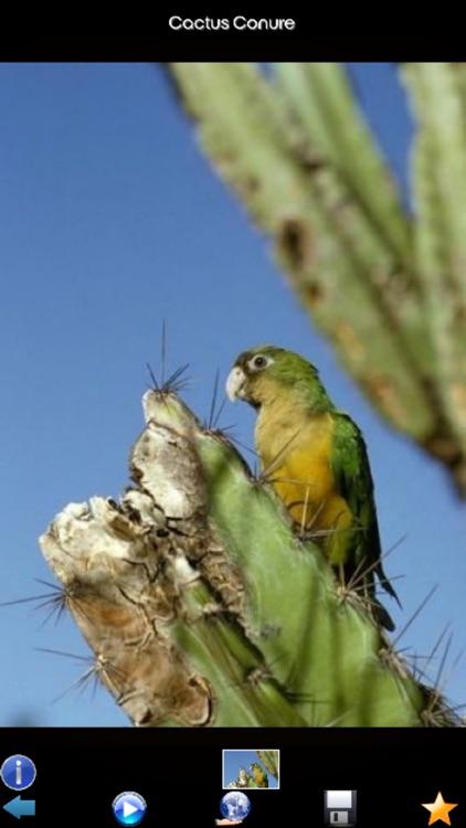 Parrot Species Guide