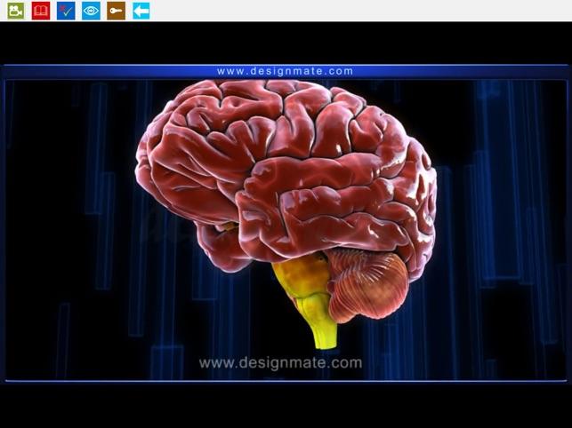 Brain Anatomy Function On The App Store