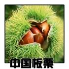 中国板栗 icon