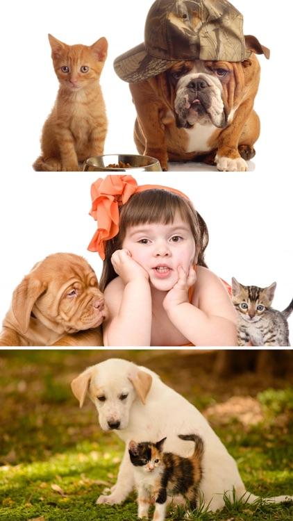 Cats & Dogs Wallpapers HD - Cute Puppies & Kittens screenshot-3