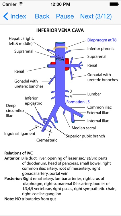 Anatomy Lectures Thorax and Abdomen screenshot-4