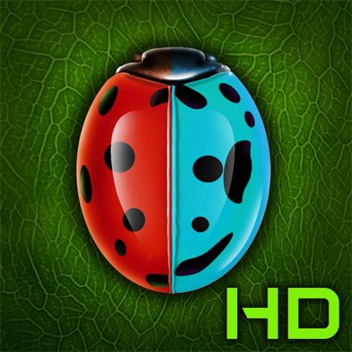 Beetle date