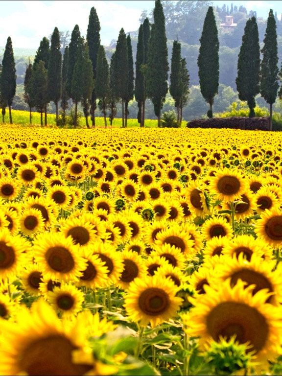 Music Color Screenshots