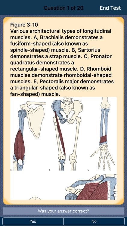 The Muscular System Manual: The Skeletal Muscles