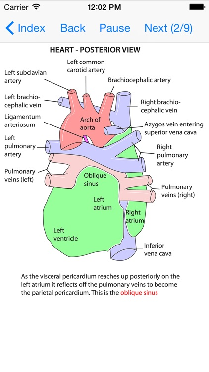 Anatomy Lectures Thorax and Abdomen