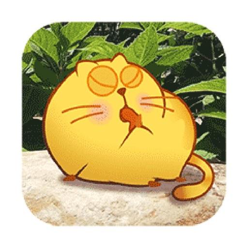 Pumpy Cat
