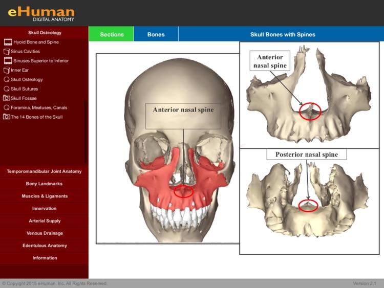 eHuman Head and Neck Anatomy by eHuman Inc.