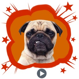 Handsome Pug Puppy Animated