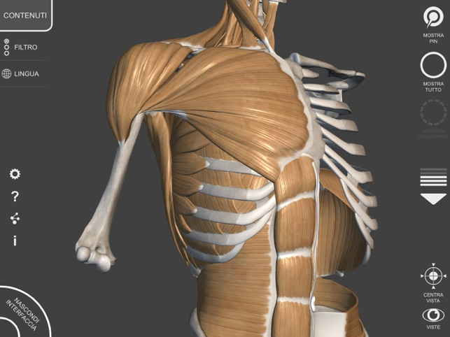 3D Anatomy for the Artist | v  1 2 on the App Store