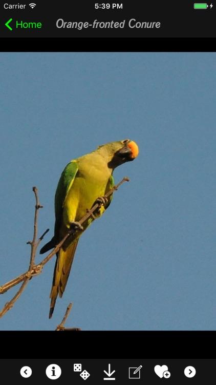 Parrots Guide