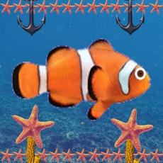Activities of Piano Fish