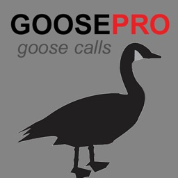 Canada Goose Call & Goose Sounds - BLUETOOTH COMPATIBLE