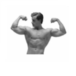 Army Body Fat Percentage Calculator for iPad