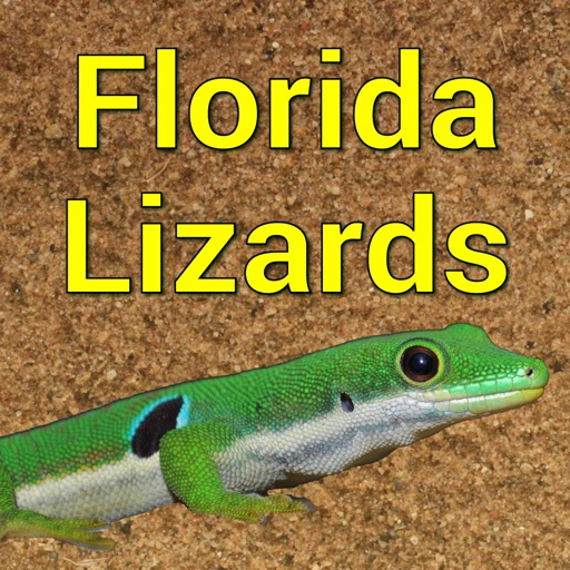 Florida Lizards – Guide to Common Species