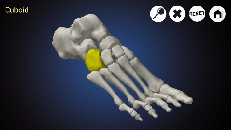 Podiatry 3D screenshot-0