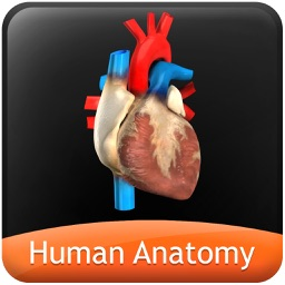 Human Anatomy Explorer - Circulatory System